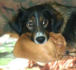 Cercano Famiglia I Cani Da Adottare La Voce Di Trieste